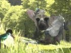 Immagine di The Last Guardian